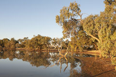 Reflections in an outback lagoon. At dawn, Queensland, Australia Royalty Free Stock Images