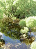 Reflections in the overgrown pond Royalty Free Stock Photos