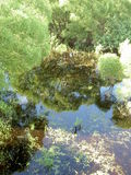 Reflections in the overgrown pond Stock Images