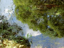 Reflections in the overgrown pond Stock Image