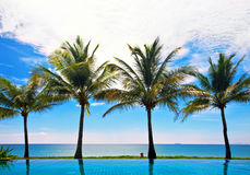 Reflections of palms Royalty Free Stock Photography
