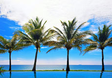 Reflections of palms in the pool Royalty Free Stock Photography