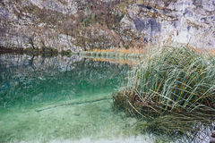 Reflections of the Plitvice Lakes National Park. Reflections produced by the lakes of Plitvice Lakes National Park Royalty Free Stock Images