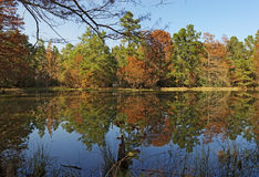 Reflections on a Pond-W G Jones State Forest Royalty Free Stock Photo