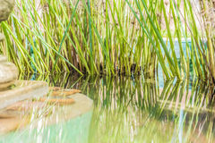 Reflections in a pond Royalty Free Stock Photography