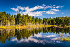 Reflections at a pond in White Mountain National Forest, New Ham Stock Images