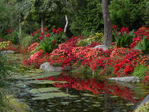 Reflections in  red. Gardens with red flower border reflected in the water Stock Photos