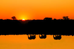 Reflections silhouettes of elephant family passing waterfront of a lake. Royalty Free Stock Photography