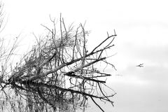 Reflections of a snag in the water. Royalty Free Stock Photos