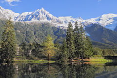 Reflections of snow-capped peaks. And coastal trees in city park pond.  Chamonix - a famous ski resort in the French Alps Stock Image