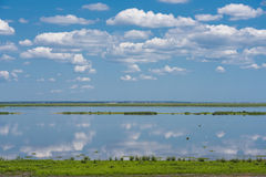 Reflections in the Still Blue Water. Skies, clouds, birds and plants are reflected in the still blue water of the wetlands on a sunney day Royalty Free Stock Photography