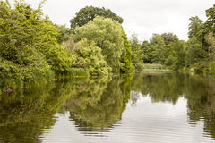 Reflections. A still and peaceful lake creates a mirror surface for lovely reflections of the summer foliage of the garden around it. An overcast day creates a Royalty Free Stock Images