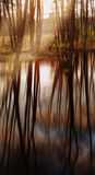 Reflections and sunray in the forest Stock Photos