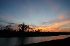 Reflections of sunset silhouette in the cypress swamp Stock Photos