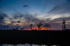 Reflections of sunset silhouette in the cypress swamp Stock Image
