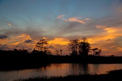 Reflections of sunset silhouette in the cypress swamp Royalty Free Stock Image
