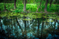 Reflections in the swamp Stock Images