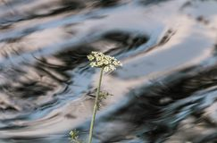 Reflections and textures in the river. On a summer afternoon with the autochthonous vegetation of Galicia Stock Image
