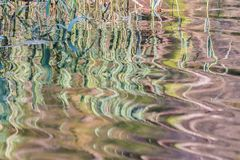 Reflections and textures in the river. On a summer afternoon with the autochthonous vegetation of Galicia Royalty Free Stock Photography