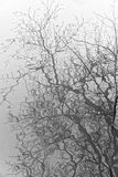 Reflections of Tree Branches in Water Stock Photos