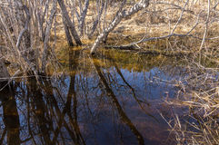 Reflections of tree branches in the water Stock Photos