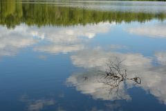 Reflections. Treeline and cloud reflections in water with a branch Stock Photos