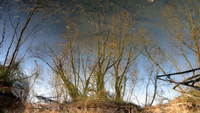 Reflections of trees Royalty Free Stock Photos