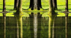 Reflections of trees in flooded forest Stock Image