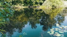 Reflections of trees, foliage and water lilies are swaying on the watery surface of the river. Reflections of trees, foliage and water lilies are swaying on stock footage