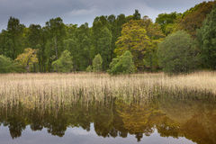 Reflections of trees on loch pityoulish Royalty Free Stock Photo