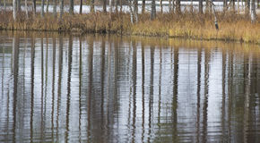 Reflections from trees. Stock Image