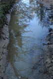 Reflections of trees in the water stand in the mountains.  royalty free stock photos
