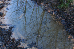 Reflections of trees in the water stand in the mountains.  royalty free stock photography