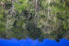 Tree reflections in Mountain Fork River, Oklahoma Royalty Free Stock Photo