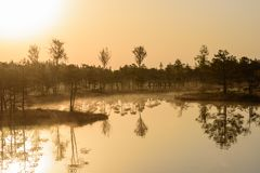 Reflections on water. Beautiful idyllic morning light, during sunrise in bog. stock images