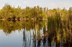 Spring Florida lakes royalty free stock images