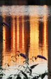 Reflections in water. Orange reflections in water with purple flower Stock Photography