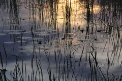 Reflections in water. Reflection of reeds and clouds in water at sunset in the Florida Everglades royalty free stock photography