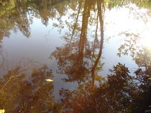 Reflections on water. Trees and plants reflecting on water royalty free stock images