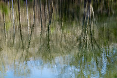 Reflections in a Woodland Marsh Stock Photo