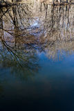 Reflections in a Woodland Marsh Stock Image