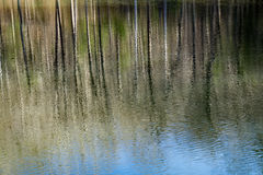 Reflections in a Woodland Marsh Stock Images
