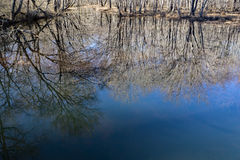 Reflections in a Woodland Marsh Royalty Free Stock Images