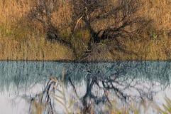 Reflectios Как вы видите? стоковое фото rf