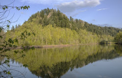 Reflectios in a river Oregon state. Royalty Free Stock Photos