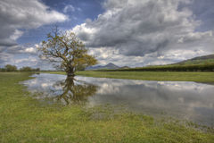 Reflective. Lone Tree, Landscape UK Stock Images