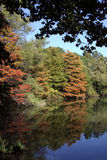 Reflective Fall Forrest Royalty Free Stock Photography