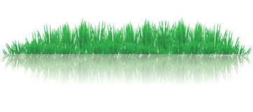 Reflective grass. Vector illustration of reflective grasses on water Royalty Free Stock Image