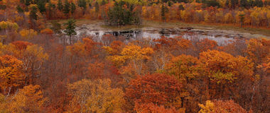 Reflective pond. Was taken from a rangers tower in Itasca state park in Minnesota Stock Photography