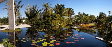 Reflective pond with water lilies and plants at the Naples Botan. Naples, Florida, USA – March 4, 2018: Reflective pond with water lilies and plants at the Stock Images